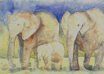 STS-AQ-0290 Elefanten Südafrika